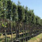 """50 lecci per Roccasecca – l'amministrazione comunale di Roccasecca aderisce al progetto """"Ossigeno"""" e festeggia la giornata dell'albero."""